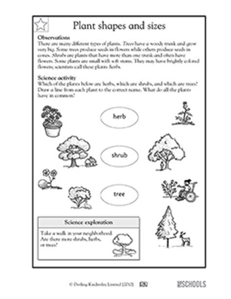 1st grade 2nd grade kindergarten science worksheets plant shapes and sizes greatschools