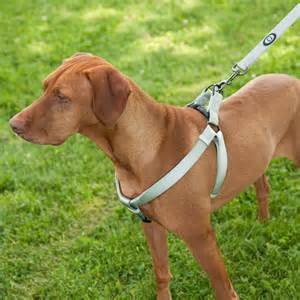 Different Types of Dog Harness