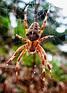 Arachnid   My Garden Visitors   Pinterest