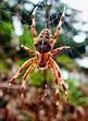 Arachnid | My Garden Visitors | Pinterest