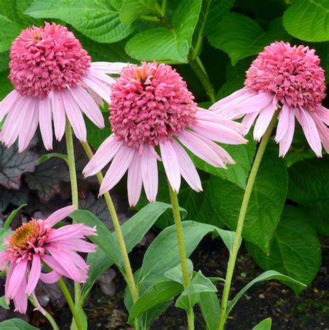 zone 4 flowers shade perennials zone 4 gardening guide