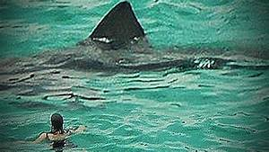 Megalodon 2015 Sightings | newhairstylesformen2014.com