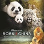 Disneynature BORN IN CHINA Opens Earth Day 2017 + Free ...