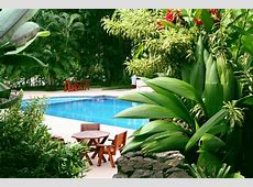Poolside Plants Pool Landscaping Ideas from Your Dallas