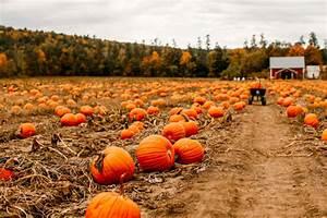 Halloween fall autumn pumpkin patch pumpkins fall season ...
