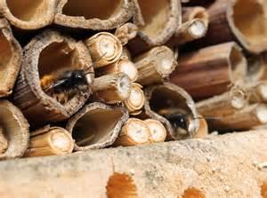 Nichoir A Insecte : nichoirs a insectes le jardin des petites ruches ~ Premium-room.com Idées de Décoration
