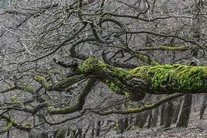 Das Herz Des Waldes : das herz des waldes forum f r naturfotografen ~ Yasmunasinghe.com Haus und Dekorationen