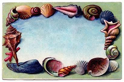 Clip Beach Seashell Borders Postcard Clipart Border