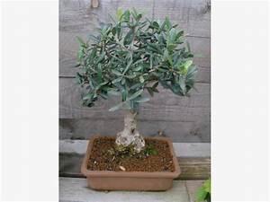 bonsai pflanzen pflege und tipps mein schoner garten With französischer balkon mit garten bonsai winterhart