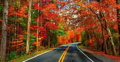 autumn road wallpaper  background image