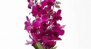 fiori da interno Fiorista