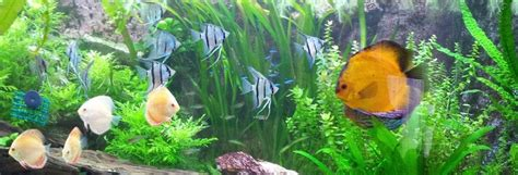 aquarium eau douce baisser ph