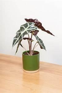 Common, Indoor, Pot, Plants, U2013, Modern, House