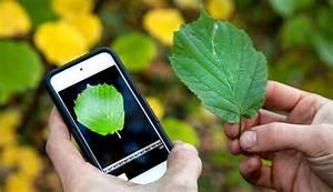 Blumen Erkennen App : pflanzen bestimmen mithilfe des smartphones die besten 8 ~ A.2002-acura-tl-radio.info Haus und Dekorationen