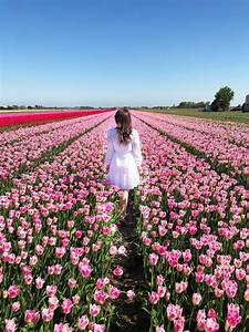 Travel, Spotlight, Visiting, The, Tulip, Fields, In, The
