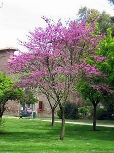 Petit Arbuste Fleuri : les arbres petits d veloppement ~ Premium-room.com Idées de Décoration