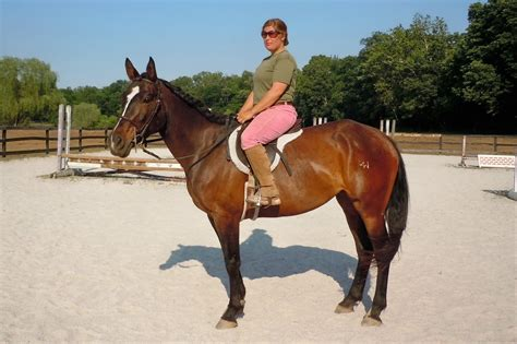 horse appendix quarter rugged destiny lark registered