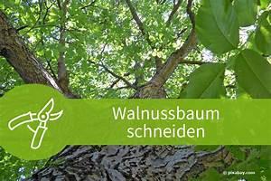 Pflanzen Schneiden Kalender : walnussbaum schneiden 5 anleitungen und zahlreiche tipps ~ Orissabook.com Haus und Dekorationen