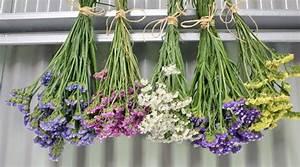 Blumen Trocknen Ohne Farbverlust : blumen trocknen leicht gemacht so einfach gelingt es ~ A.2002-acura-tl-radio.info Haus und Dekorationen