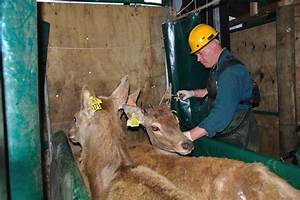 Tuberculosis warning after deer hunter contracts deadly ...