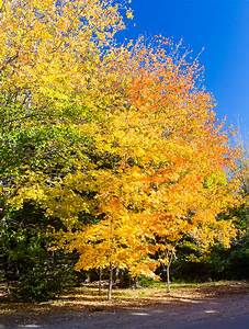 Fall Foliage 2015 | Foci Pictures  Fall