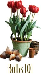 curbside chaos yard makeover and easy bulb planting