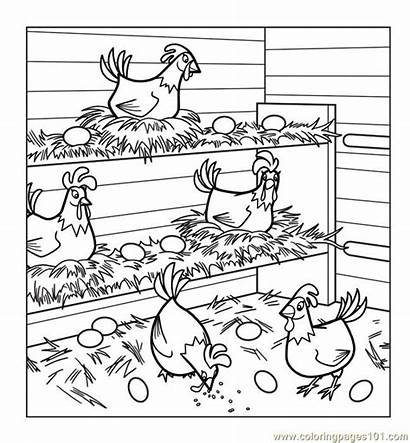 Coloring Chicken Chickens Pages Coop Hens Chicks