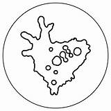 Coloring Amoeba Protists Microbiology Microbes Scavenger Hunt Amnh sketch template