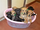 Battersea Dogs Home: 17 things you didn't know | Metro News