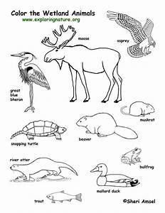 Forest Animals Coloring Pages - AZ Coloring Pages