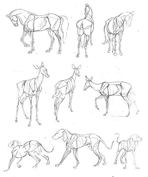 art  animal drawing  ken hultgren anatoref