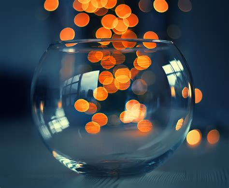 ranzy photography  beautiful tips examples  bokeh