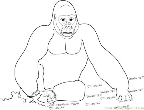 silverback gorilla coloring pages