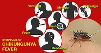 Chikungunya – What is it? How is differ from dengue ...