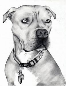 Best 25+ Pitbull drawing ideas on Pinterest | Pit bull art ...