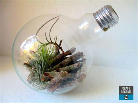light bulb terrarium tillandsia terrarium in a wine bottle craft organic