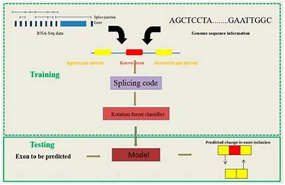 Rna Exon Seq Sequence Skipping Events Forest