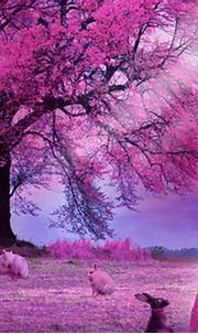 Pink Princess - Fantasy & Abstract Background Wallpapers ...