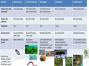 Numéro De Téléphone De Mister Auto : seres vivos katia h ntemann ppt descargar ~ Maxctalentgroup.com Avis de Voitures