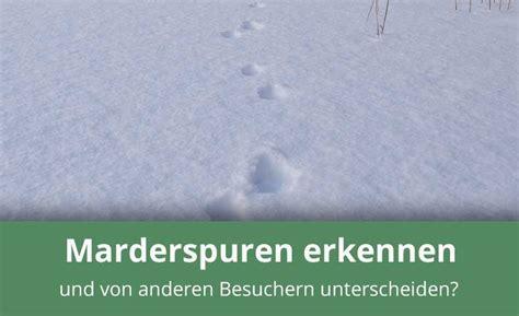 Marderspuren Erkennen Und Verstehen » Infos & Tipps