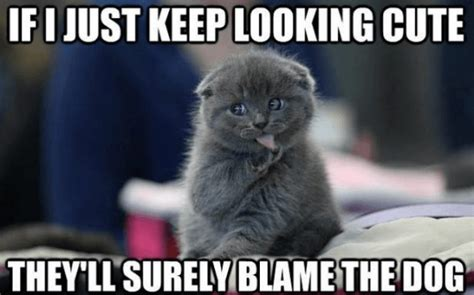 Cat Meme Images - 37 of the best cat memes the internet has ever made