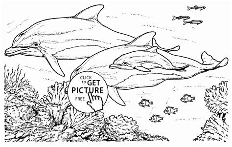 Realistic Dolphins Coloring Page For Kids Animal Coloring