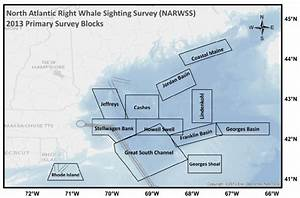 North Atlantic Right Whale Sighting Survey  Narwss  Blocks Regularly