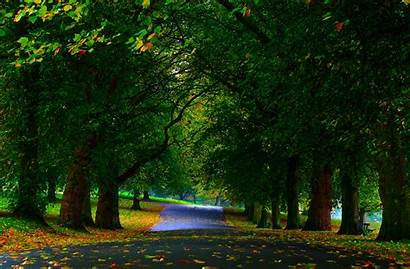 Tree Park Wallpapers Nature Trees Forest Leaf