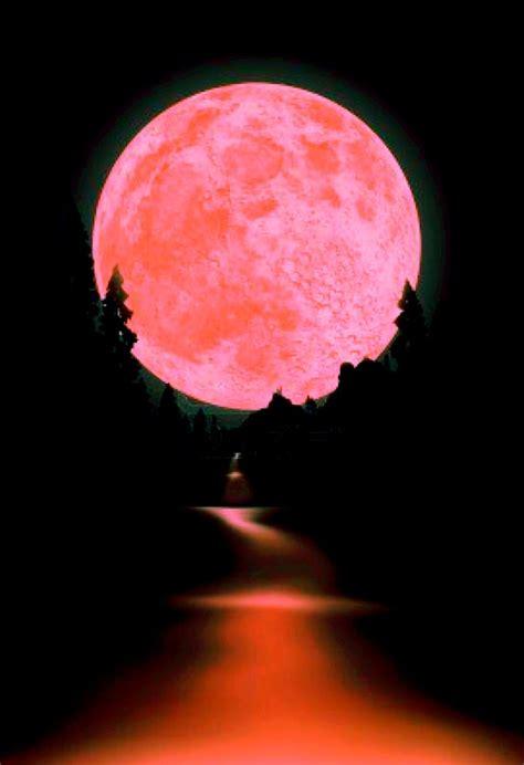 Permalink to Pink Moon