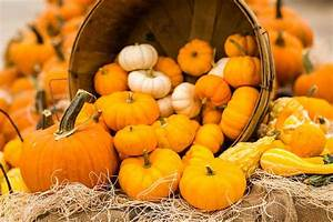 11, Types, Of, Pumpkins, You, Can, Grow, In, Your, Backyard