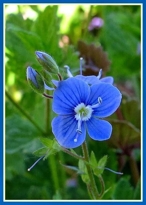 Ereprijs   ดอกไม้