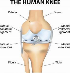 Knee Anatomy  Ligaments  Muscles  Tendons  And Injuries
