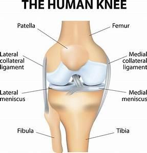 The Knee  Anatomy  Injuries  Treatment  And Rehabilitation