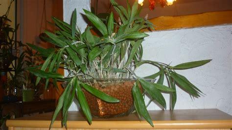 culture orchid 233 e en pot de verre
